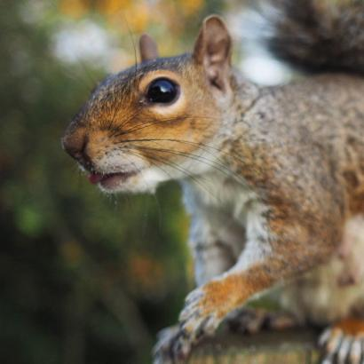 nature_tongueoutsquirrel_london