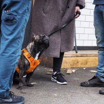 street_dogatfeet_london