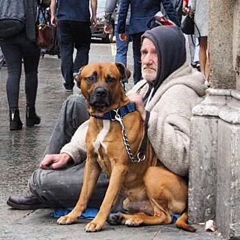 streetman_dog_london